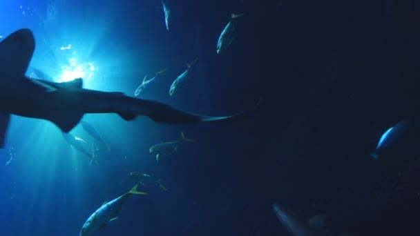 oceán pod vodou
