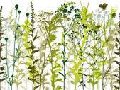 naturale selvaggio piante ed erbacce set sagome.