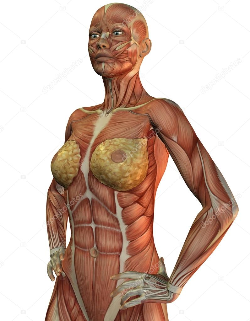 Anatomy and muscles of a woman — Stock Photo © DigitalArtB #18966633