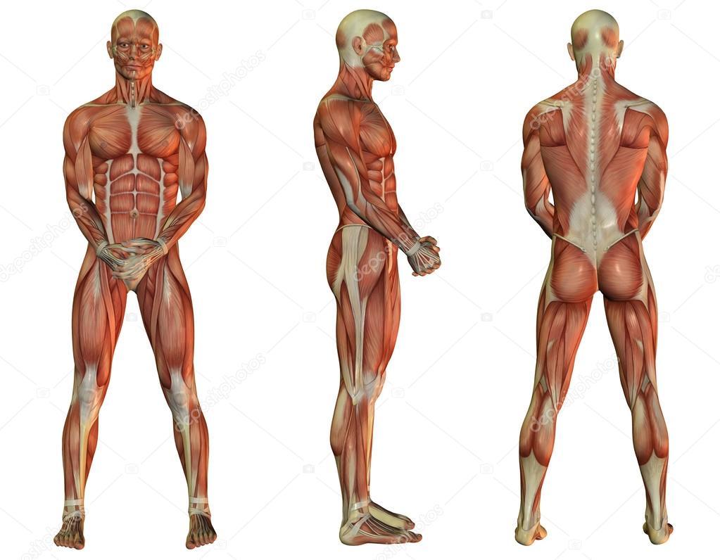 Muscle man standing — Stock Photo © DigitalArtB #29671425