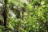 Fotografia giungla