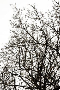 Abstract Silhouette Branches