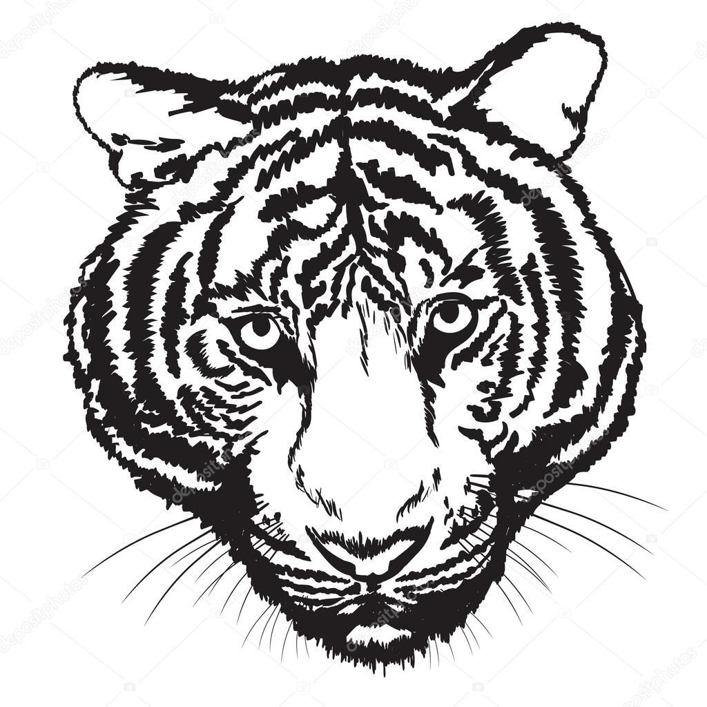 Tiger Line Art U2014 Stock Vector