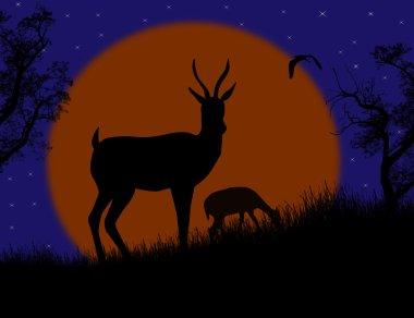 Gazelle couple in wild nature landscape
