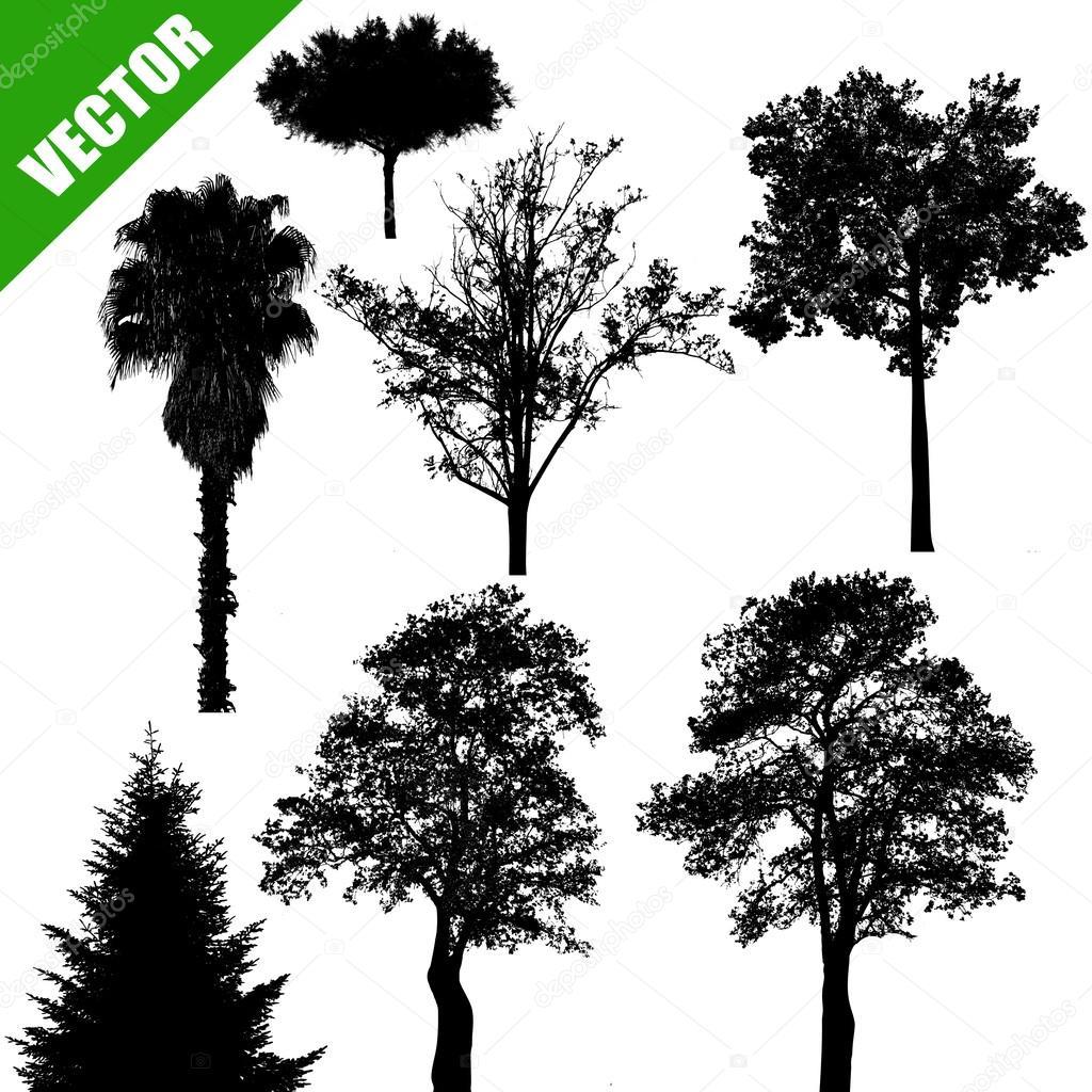 Various trees on white