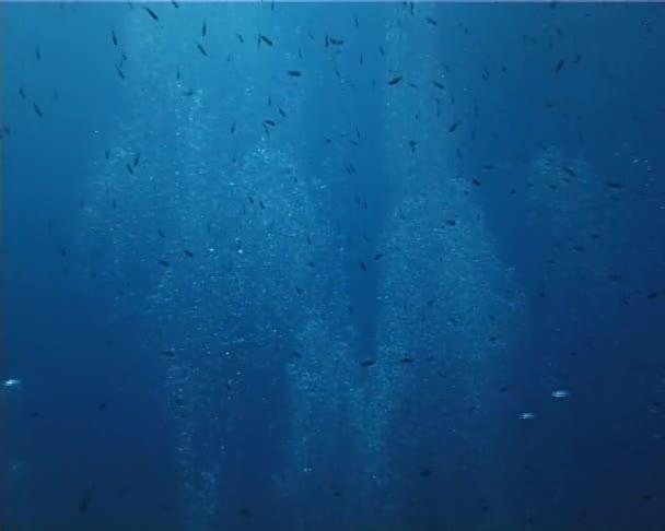 bubliny a ryby