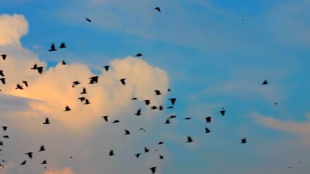 létající ptáci. obrovské hejno havrani a vrány letí na pozadí krásných mraků na obloze