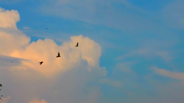 letící hejno černých ptáků. hejno divokých ptáků, kteří létali na pozadí krásné modré oblohy