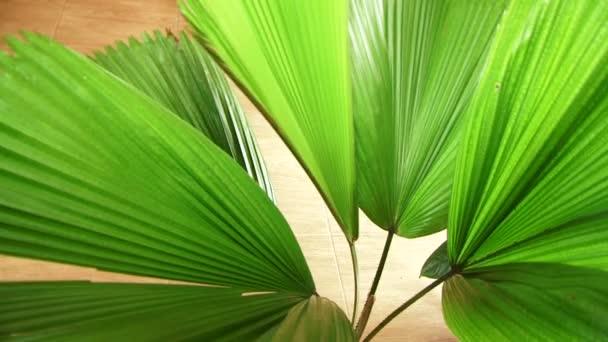 Closeup of an exotic green indoor tree