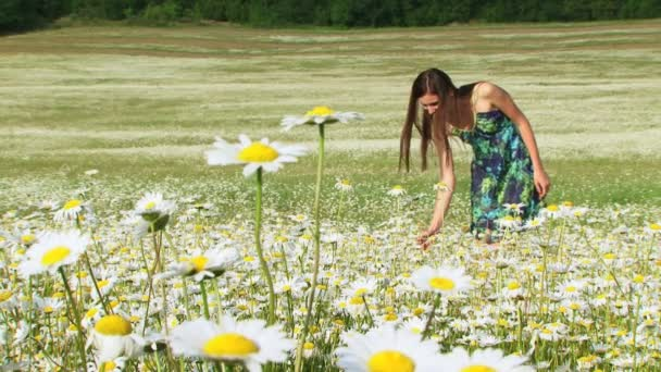 Woman running across a blooming chamomile field. Blooming chamomile field.