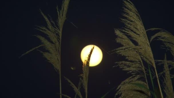 temná noc