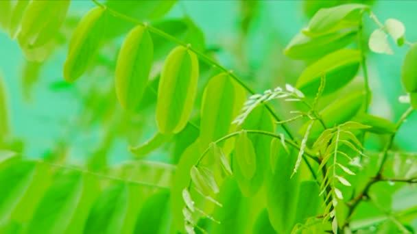 Zelený strom listy. detail. stromové listí