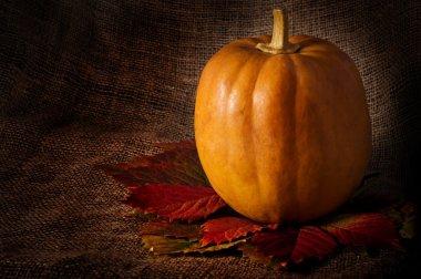 Pumpkin on matting background