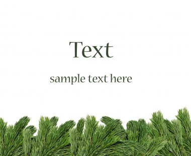 Christmas tree branches border over white background