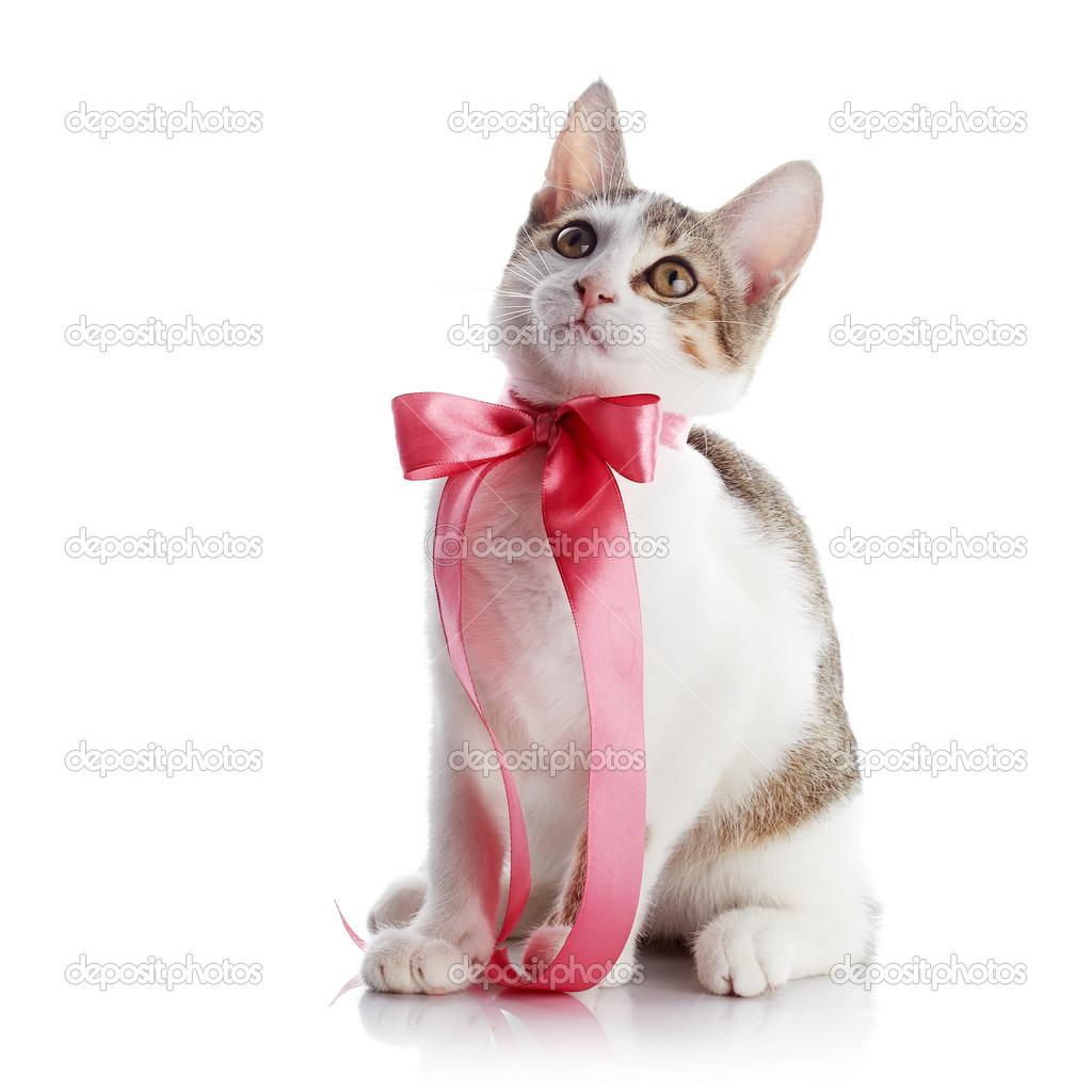 Картинки изящные кошки с бантиком
