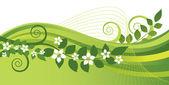 Fotografia fiori di gelsomino bianchi e verde turbinii banner