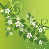 Fotografia bellissimi fiori di gelsomino e turbinii verde su sfondo verde