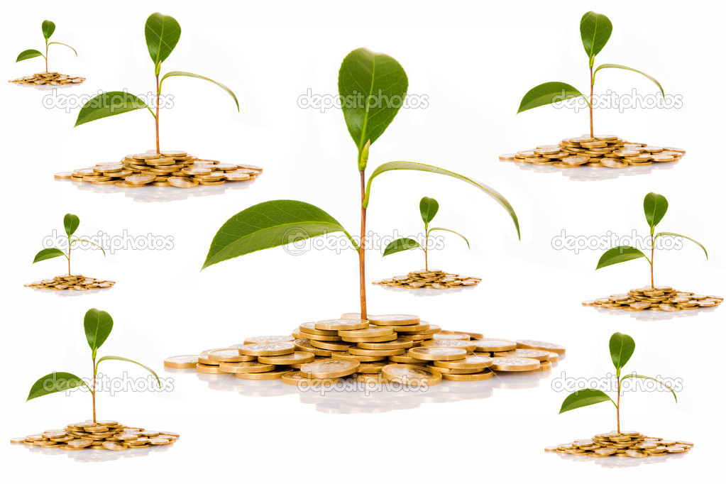 Coins and plant on white background