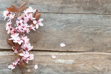 Spring blossom on wood background stock vector