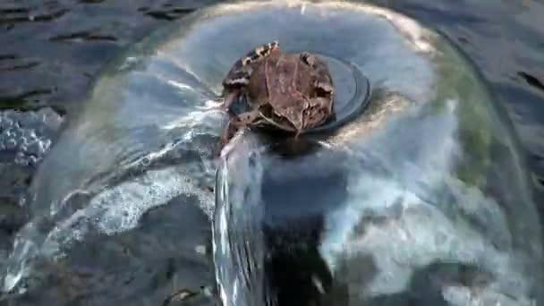 der Frosch im Wasser