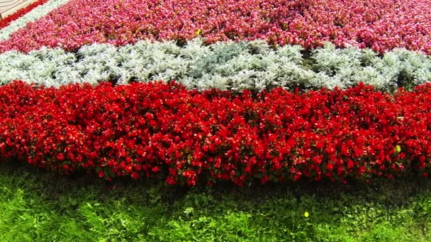 A Bed Of Red Flowers Stock Video Hrustalev 31704337