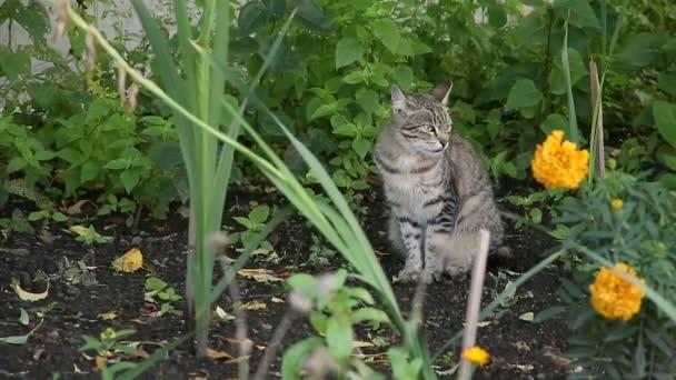 szürke macska fű