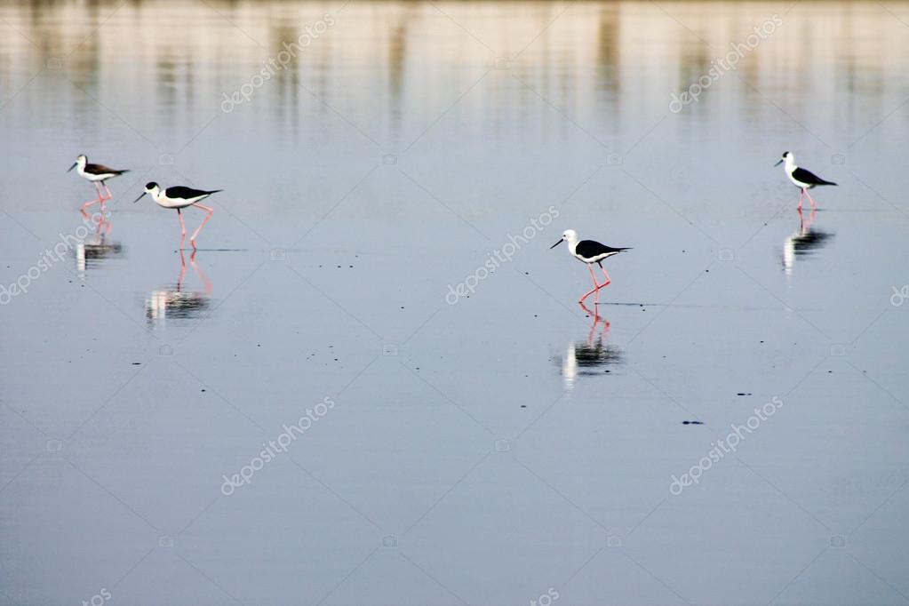 Four bird