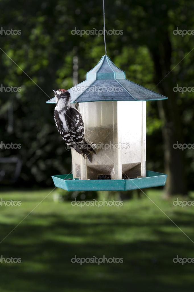 μεγάλο πουλί κρέμεται