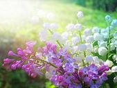 Lilly údolí a jarní květy kytice