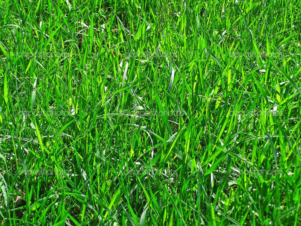 Sfondo Verde Erba Foto Stock Alinbrotea 12880659