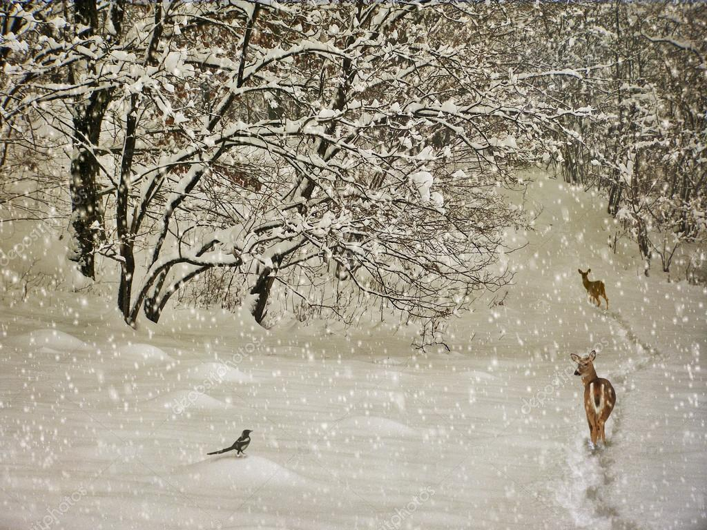 aging winter photography postcard � stock photo
