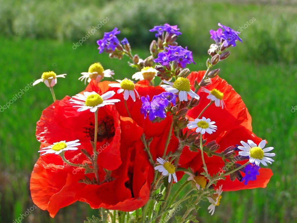 Lumineux bouquet color de fleurs naturelles sauvages et jardins photographie alinbrotea - Bouquet de fleurs sauvages ...