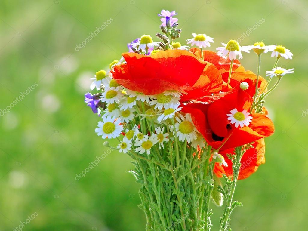 Lumineux bouquet color de fleurs naturelles sauvages et for Bouquet de fleurs lumineux