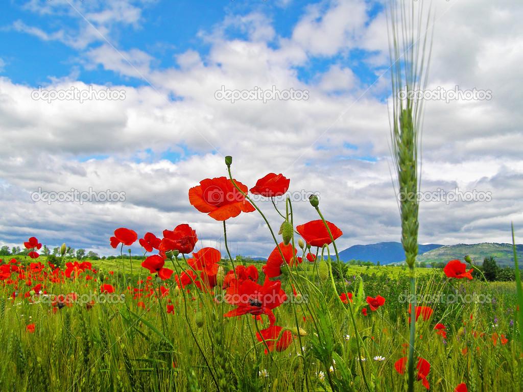 Peut-on prier Dieu pour avoir de l'argent ? Depositphotos_50948709-stock-photo-romanian-summer-countryside