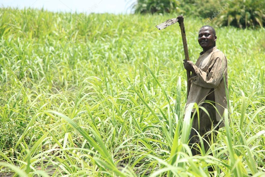 Sugarcane Plantation - Uganda, Africa