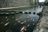 upejpavý kapr - brýle most, nagasaki, Japonsko, Asie