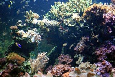 Coral Reef - Vancouver Aquarium, Vancouver, Canada