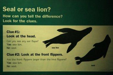 Seal - Vancouver Aquarium, Vancouver, Canada