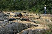 Fotografie kamenité půdě - beacon hill park, victoria, bc, Kanada