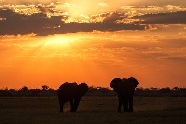 Sunset Over The Chobe National Park, Botswana, Africa stock vector
