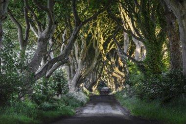 The Dark Hedges, N. Ireland