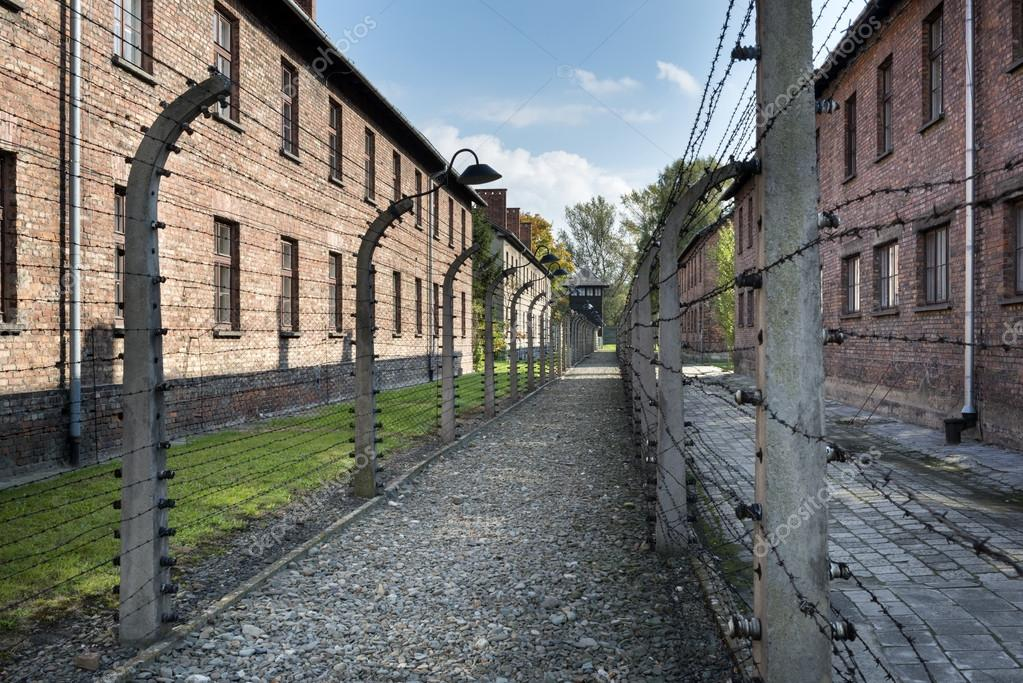 barbed wire fence concentration camp. barbed wire fence in auschwitz ii concentration camp poland \u2014 stock photo k
