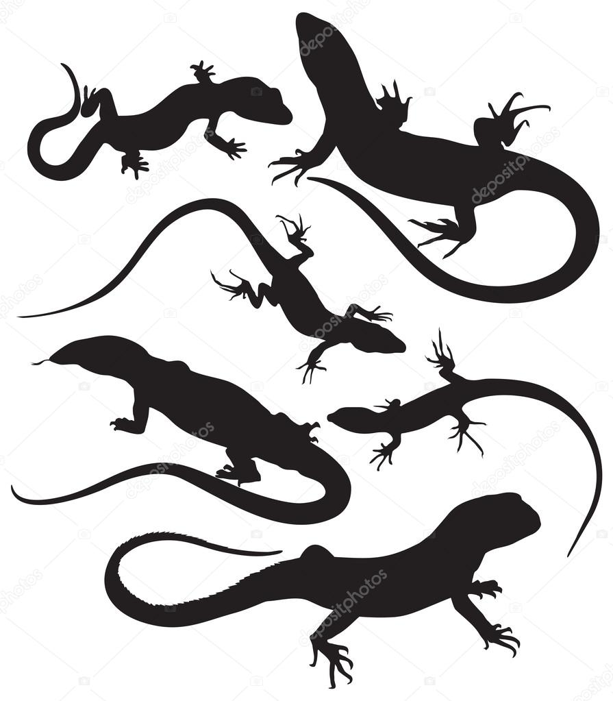 vector lizards