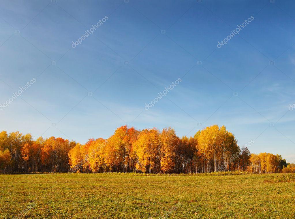 Beautiful autumn landscape in a field