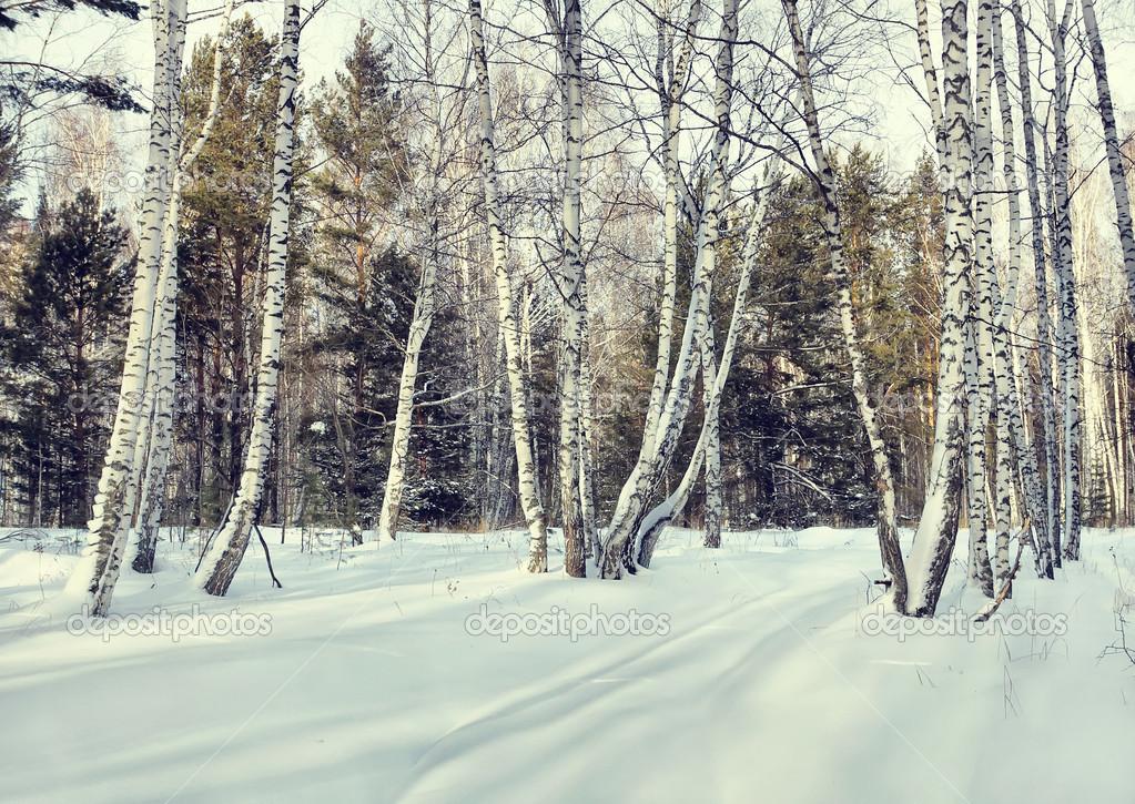 P ekr sn les v zim b ezov les stock fotografie a poselenov 39556805 - Schneebilder kostenlos ...