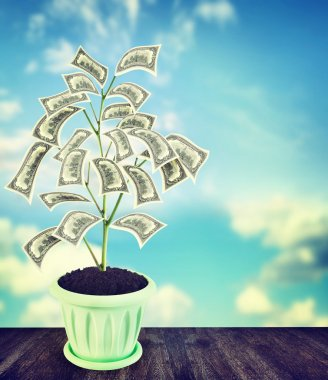 Money tree with US dollar banknotes grows in a flowerpot