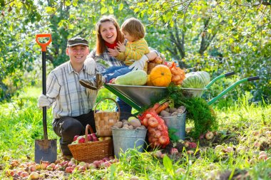 Happy family harvests of apples