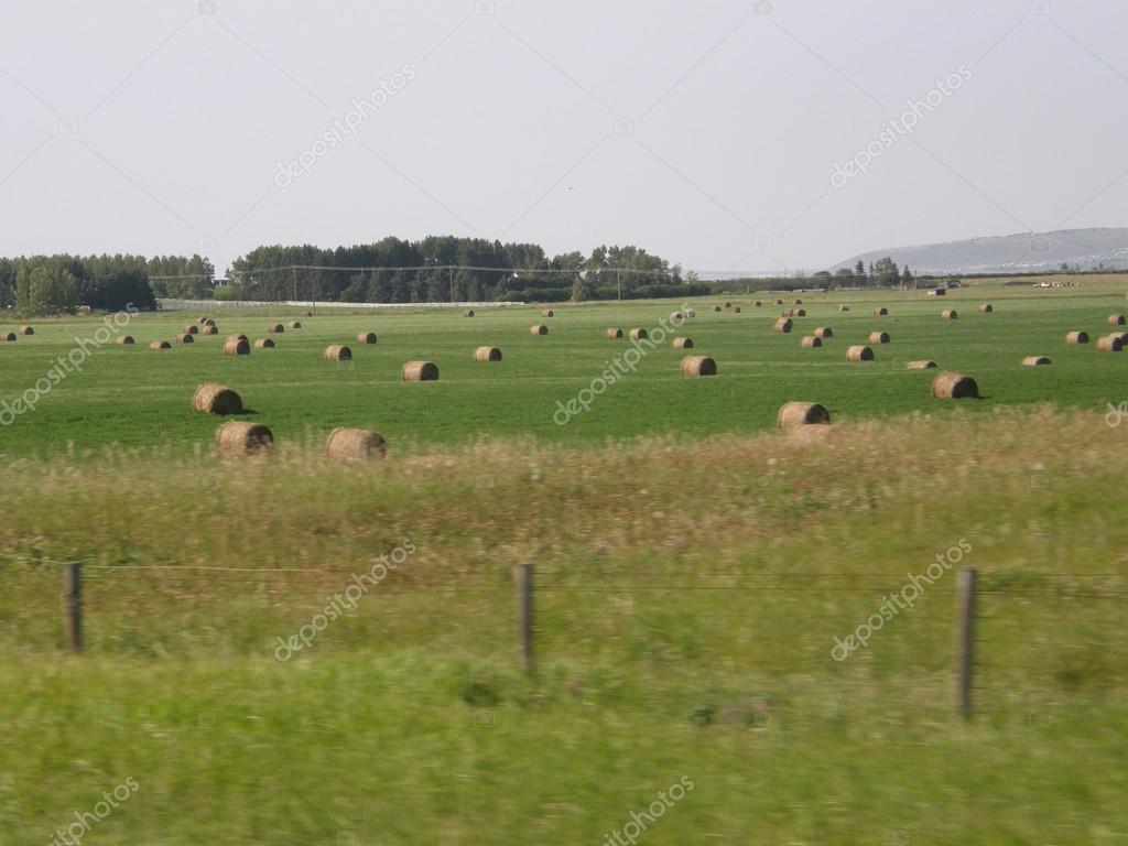 Rolls of hay on field in Calgary, Canada