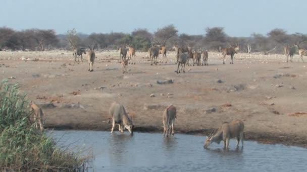 Vegyes állatok például a víznyelő