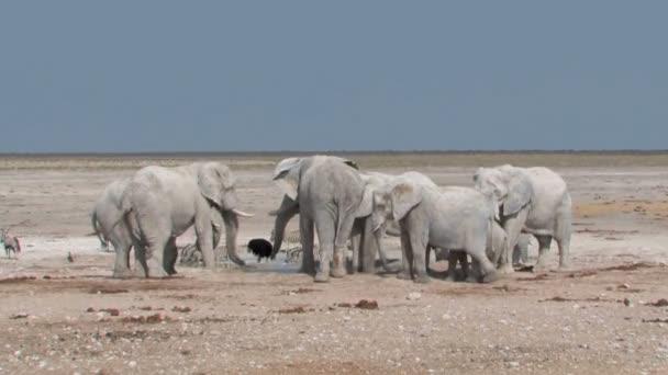 Elefánt pushs más elefánt